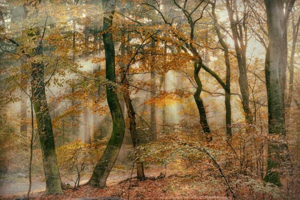 konfigurieren des Kunstdrucks in Wunschgröße You Cant Hide Your Rays for Me von Van de Goor, Lars