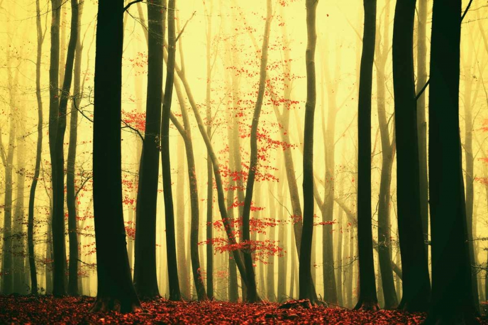 konfigurieren des Kunstdrucks in Wunschgröße Red Leaves von Van de Goor, Lars