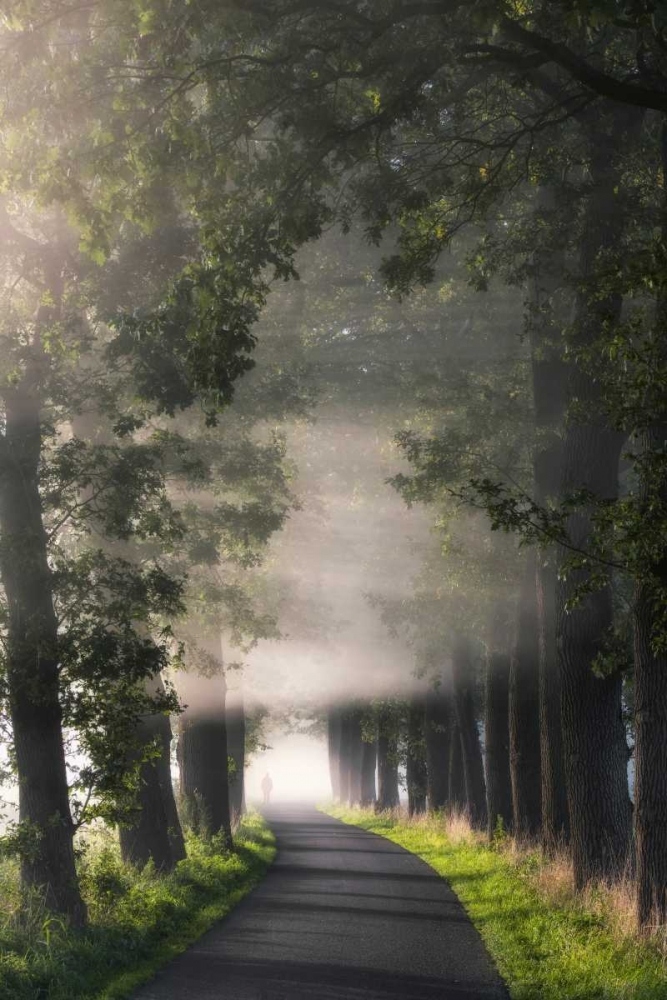 konfigurieren des Kunstdrucks in Wunschgröße Rays of Fog von Van de Goor, Lars