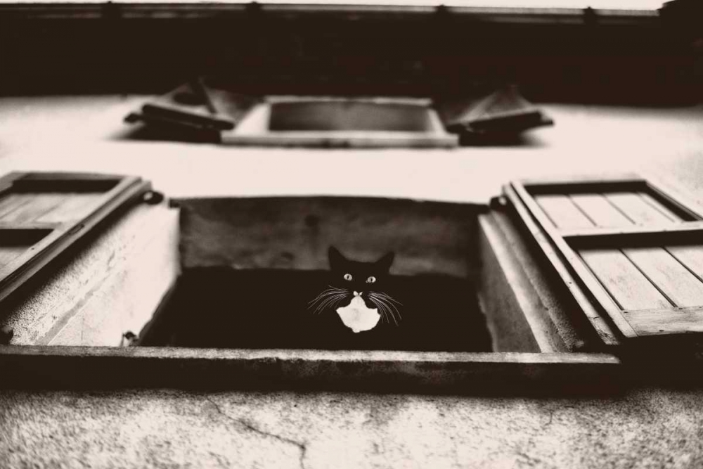 konfigurieren des Kunstdrucks in Wunschgröße Dali the Cat von Van de Goor, Lars