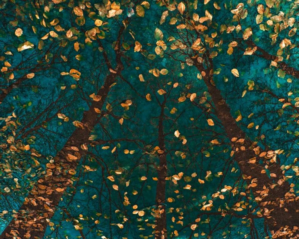 konfigurieren des Kunstdrucks in Wunschgröße Platoa€™s Trees von Van de Goor, Lars