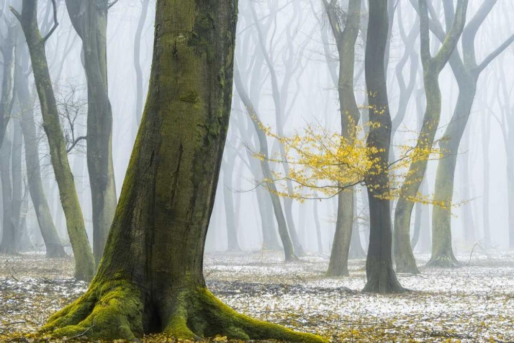 konfigurieren des Kunstdrucks in Wunschgröße Winter Colors von Van de Goor, Lars