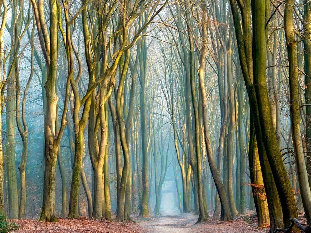 konfigurieren des Kunstdrucks in Wunschgröße Light and Trees von Van de Goor, Lars