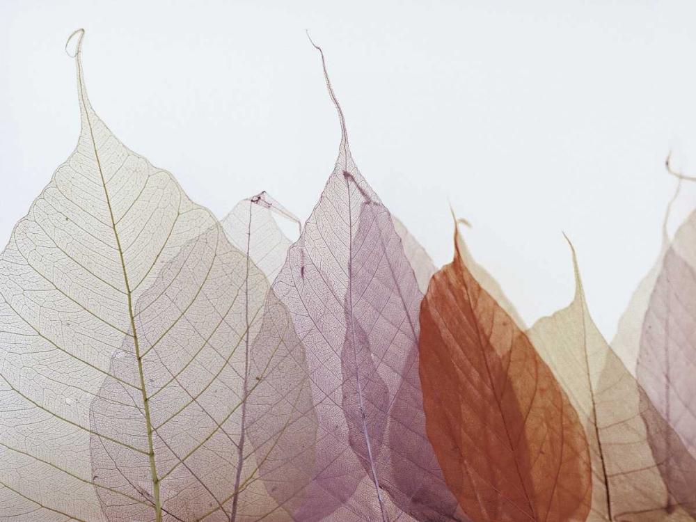 konfigurieren des Kunstdrucks in Wunschgröße Cabernet von Zedd, Durwood