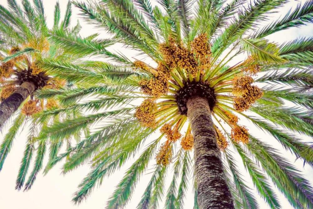 konfigurieren des Kunstdrucks in Wunschgröße Chic Palms I von Acosta