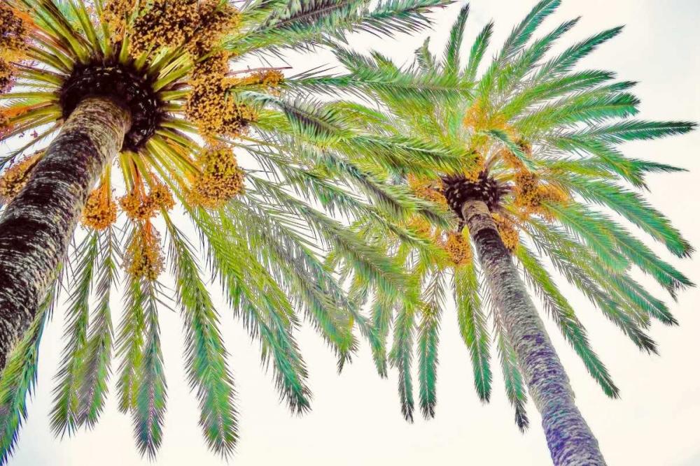 konfigurieren des Kunstdrucks in Wunschgröße Chic Palms II von Acosta