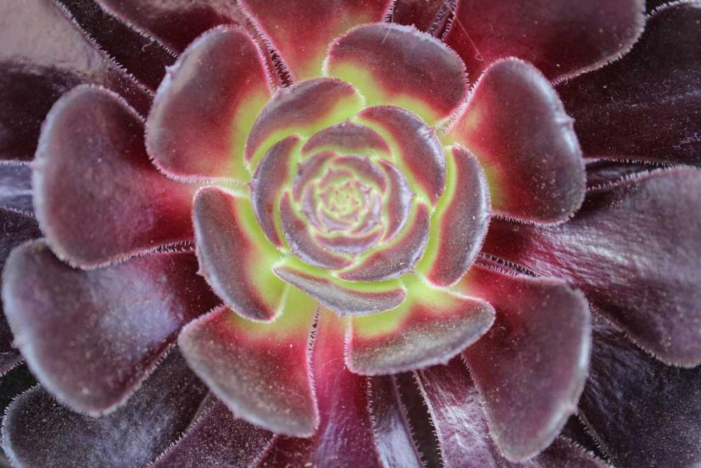konfigurieren des Kunstdrucks in Wunschgröße Bright Succulent von Coppel, Anna