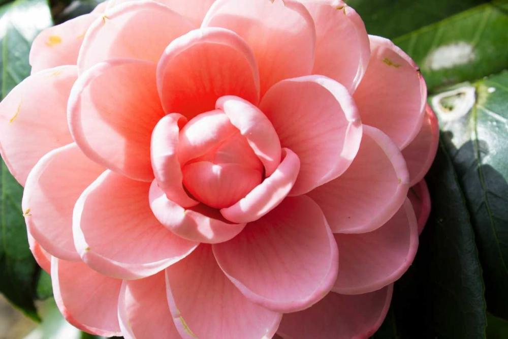 konfigurieren des Kunstdrucks in Wunschgröße Coral Bloom von Coppel, Anna