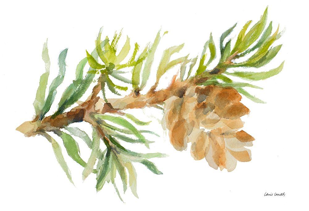 konfigurieren des Kunstdrucks in Wunschgröße Fir Tree Branch and Cone von Loreth, Lanie
