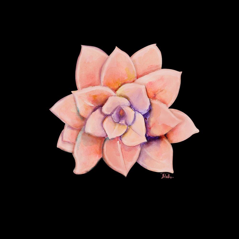 konfigurieren des Kunstdrucks in Wunschgröße Peach Succulent on Black von Pinto, Patricia