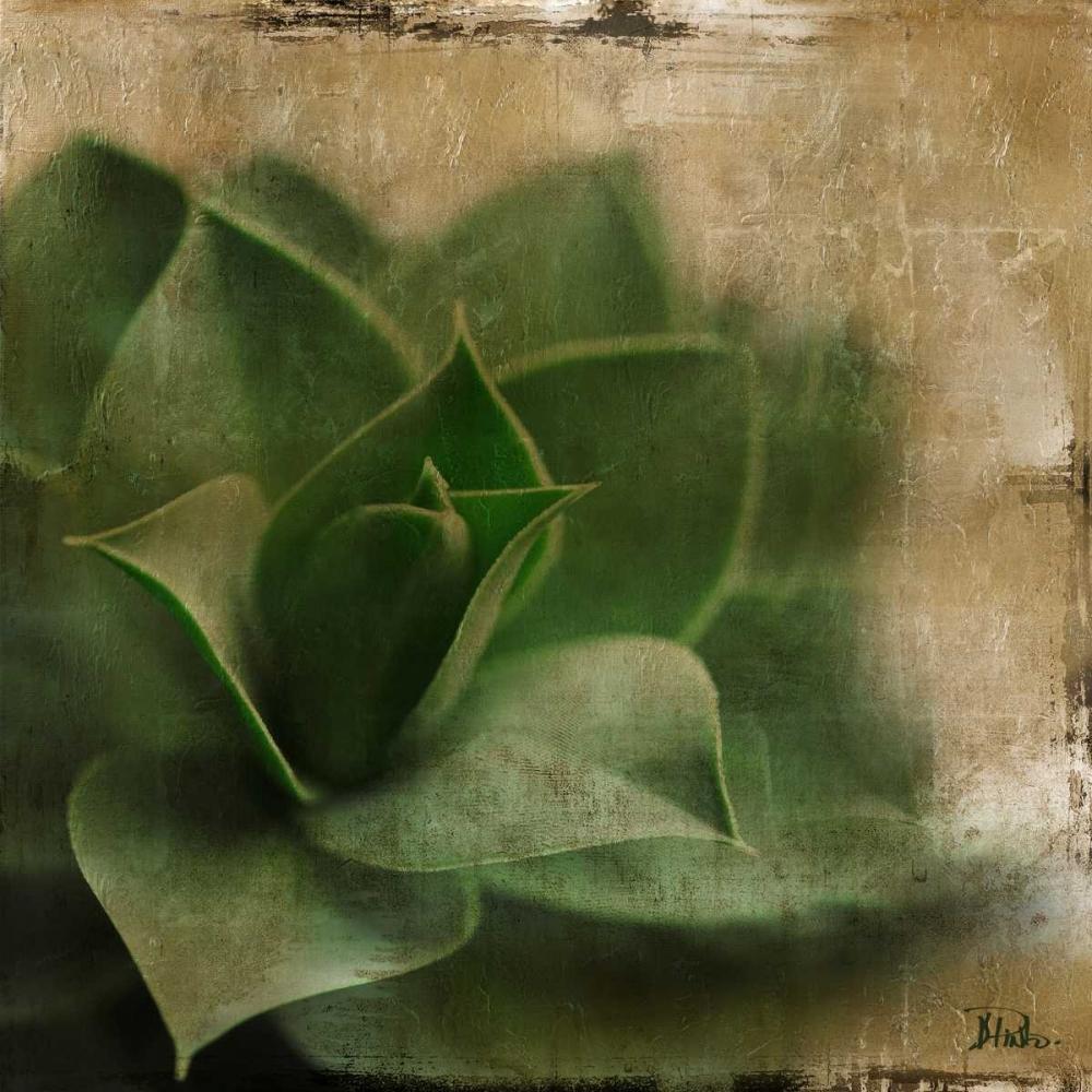konfigurieren des Kunstdrucks in Wunschgröße Succulent II von Pinto, Patricia