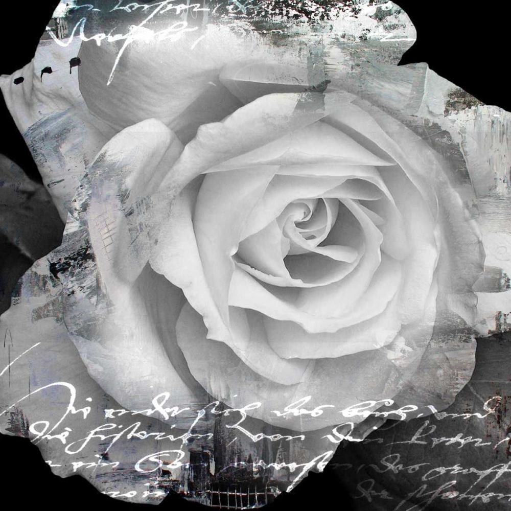 konfigurieren des Kunstdrucks in Wunschgröße White Rose I von Baker, Micha