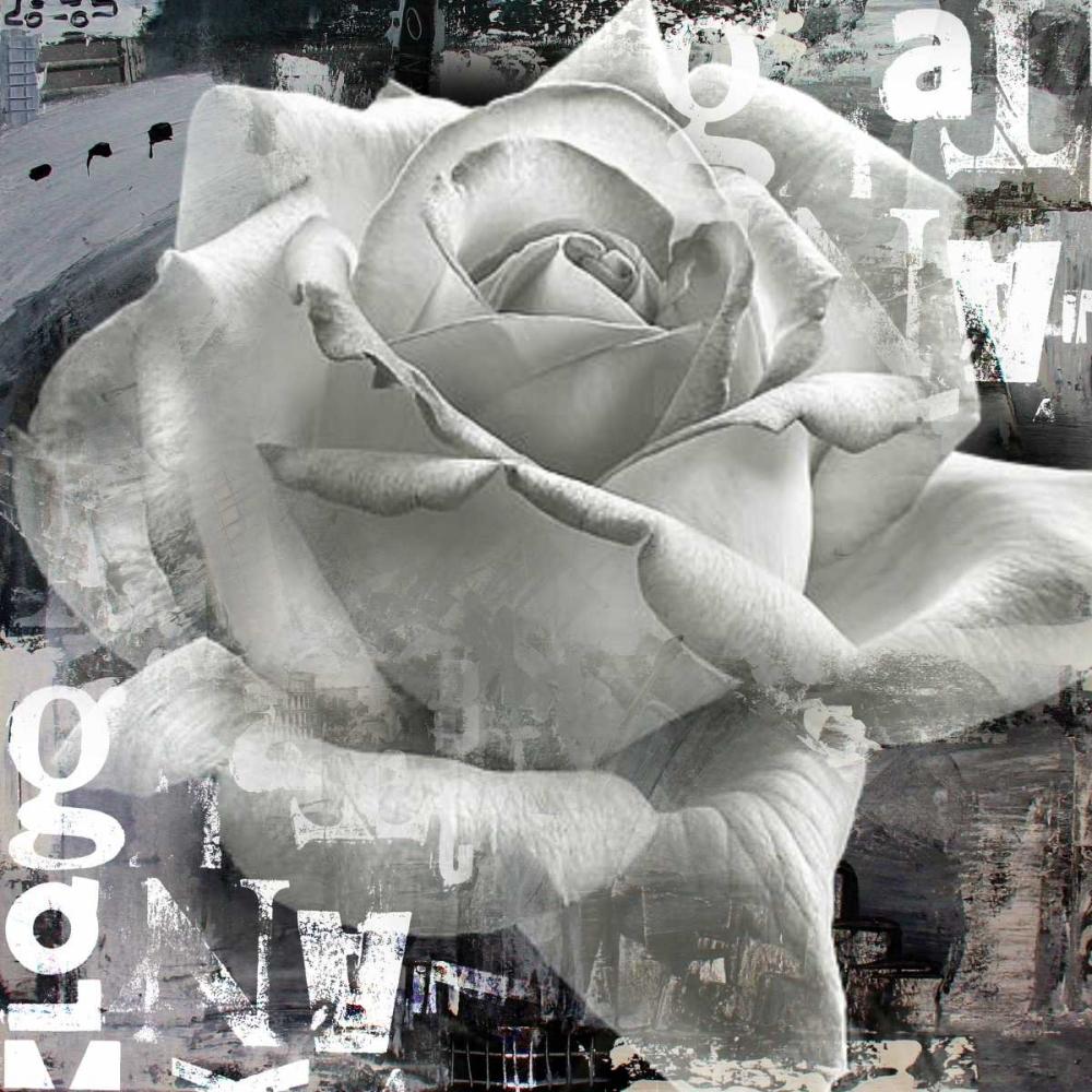 konfigurieren des Kunstdrucks in Wunschgröße White Rose II von Baker, Micha