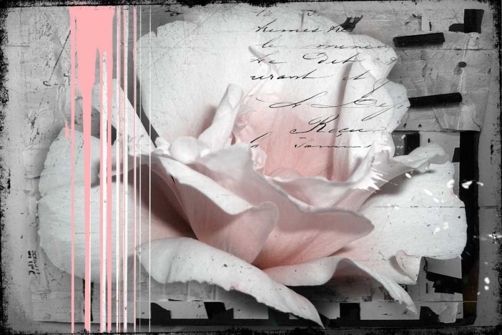 konfigurieren des Kunstdrucks in Wunschgröße Pink Rose von Baker, Micha