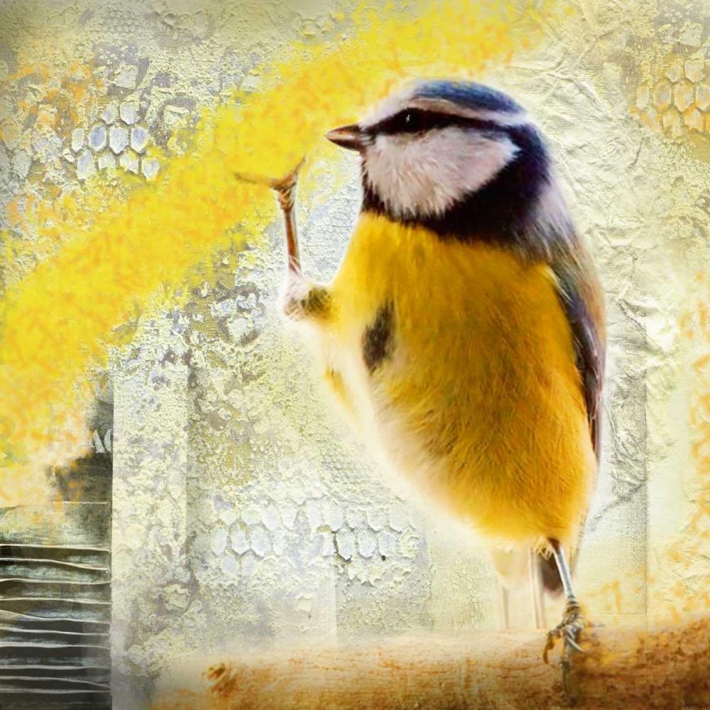Birdy von de Haas, Mascha <br> max. 152 x 152cm <br> Preis: ab 10€