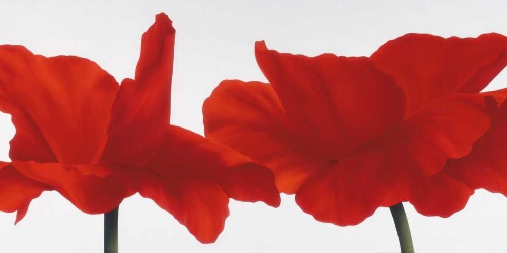konfigurieren des Kunstdrucks in Wunschgröße Red III von Poelstra-Holzhaus, Yvonne