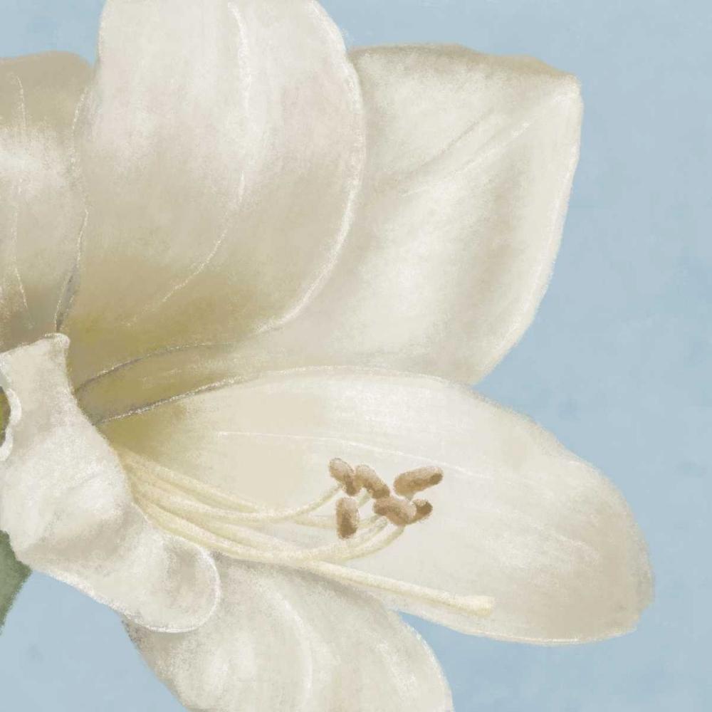 konfigurieren des Kunstdrucks in Wunschgröße White amaryllis I von Linda, Wood