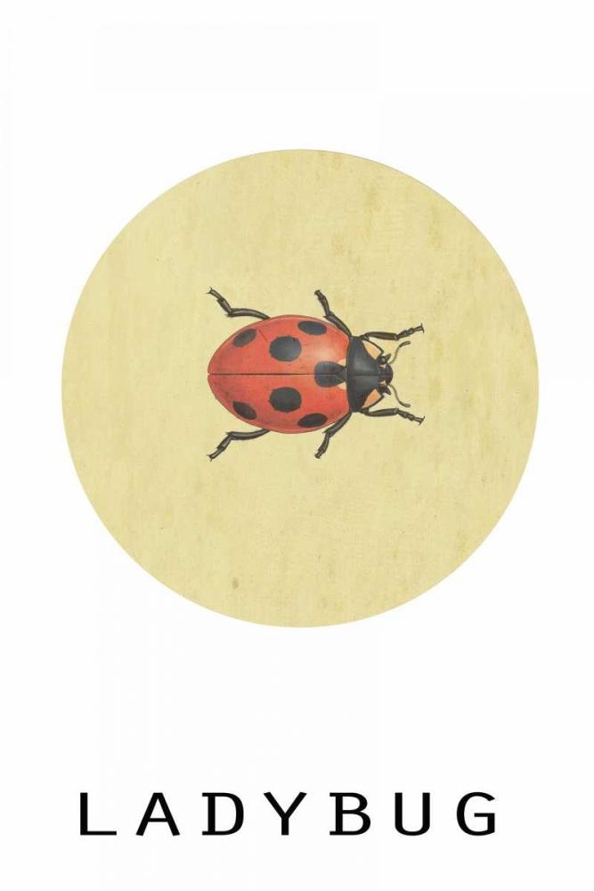 konfigurieren des Kunstdrucks in Wunschgröße Ladybug von Waltz, Anne