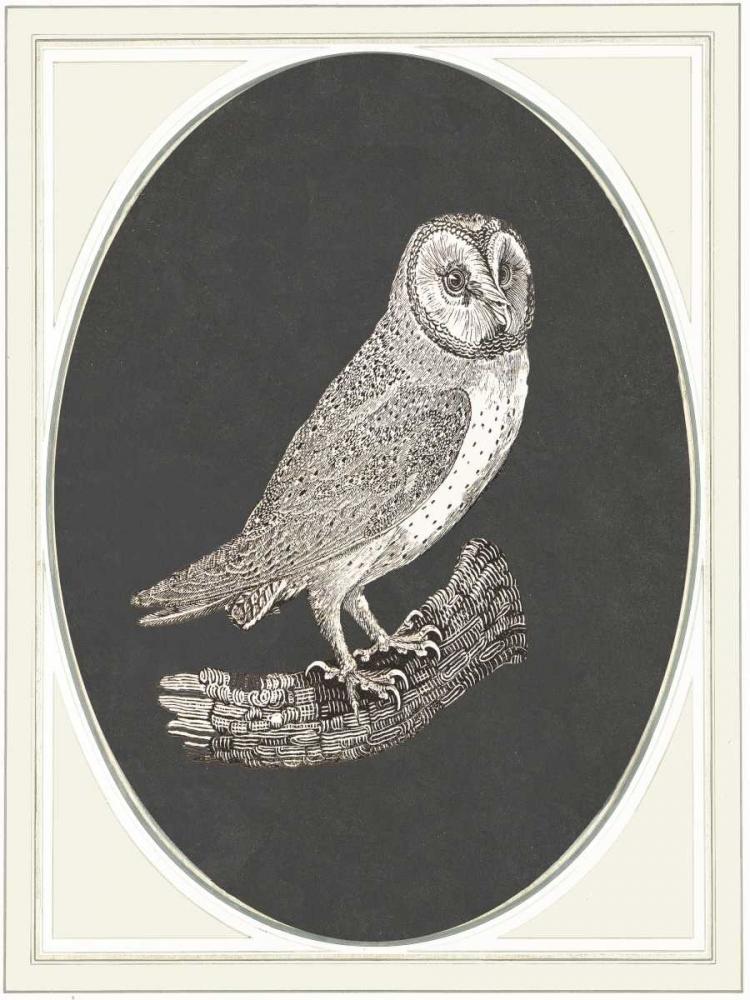 Oehoe II von Waltz, Anne <br> max. 58 x 79cm <br> Preis: ab 10€