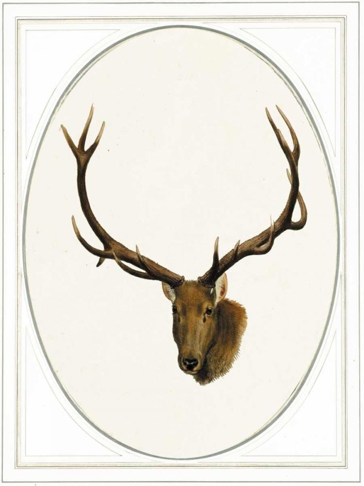 Deer II von Waltz, Anne <br> max. 58 x 79cm <br> Preis: ab 10€