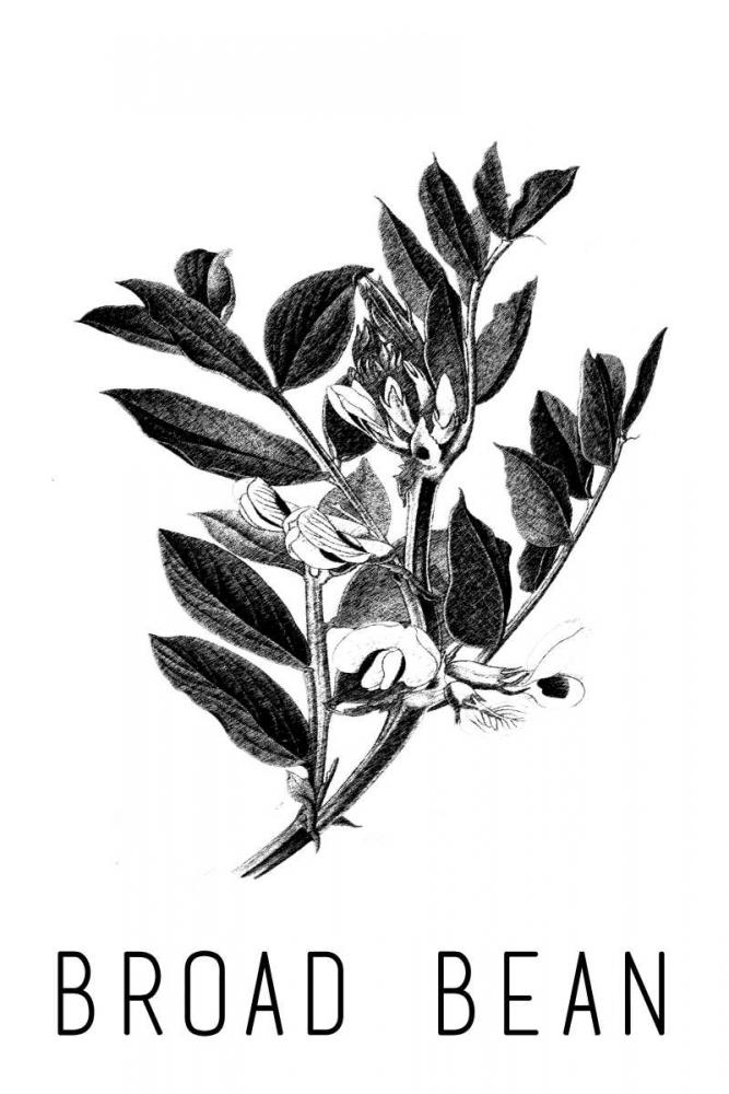 konfigurieren des Kunstdrucks in Wunschgröße Broad Bean von Waltz, Anne