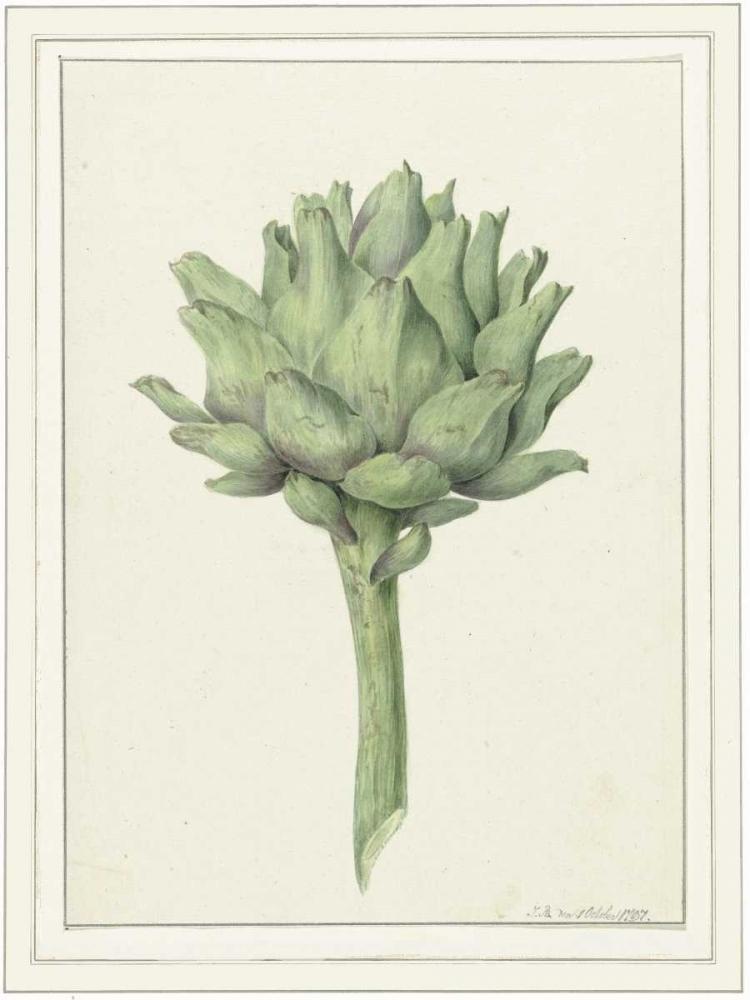 Classic veg von Waltz, Anne <br> max. 58 x 79cm <br> Preis: ab 10€