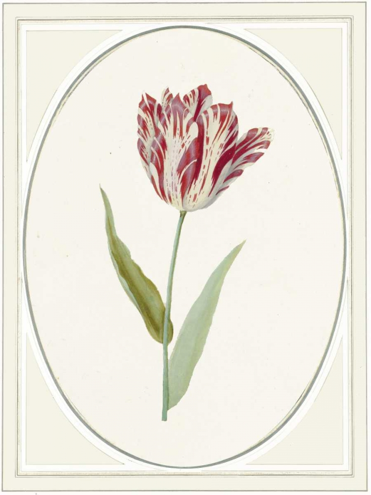 Tulipa V von Waltz, Anne <br> max. 58 x 79cm <br> Preis: ab 10€