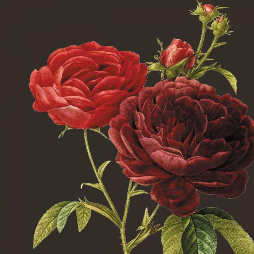 konfigurieren des Kunstdrucks in Wunschgröße Classic rose von Waltz, Anne