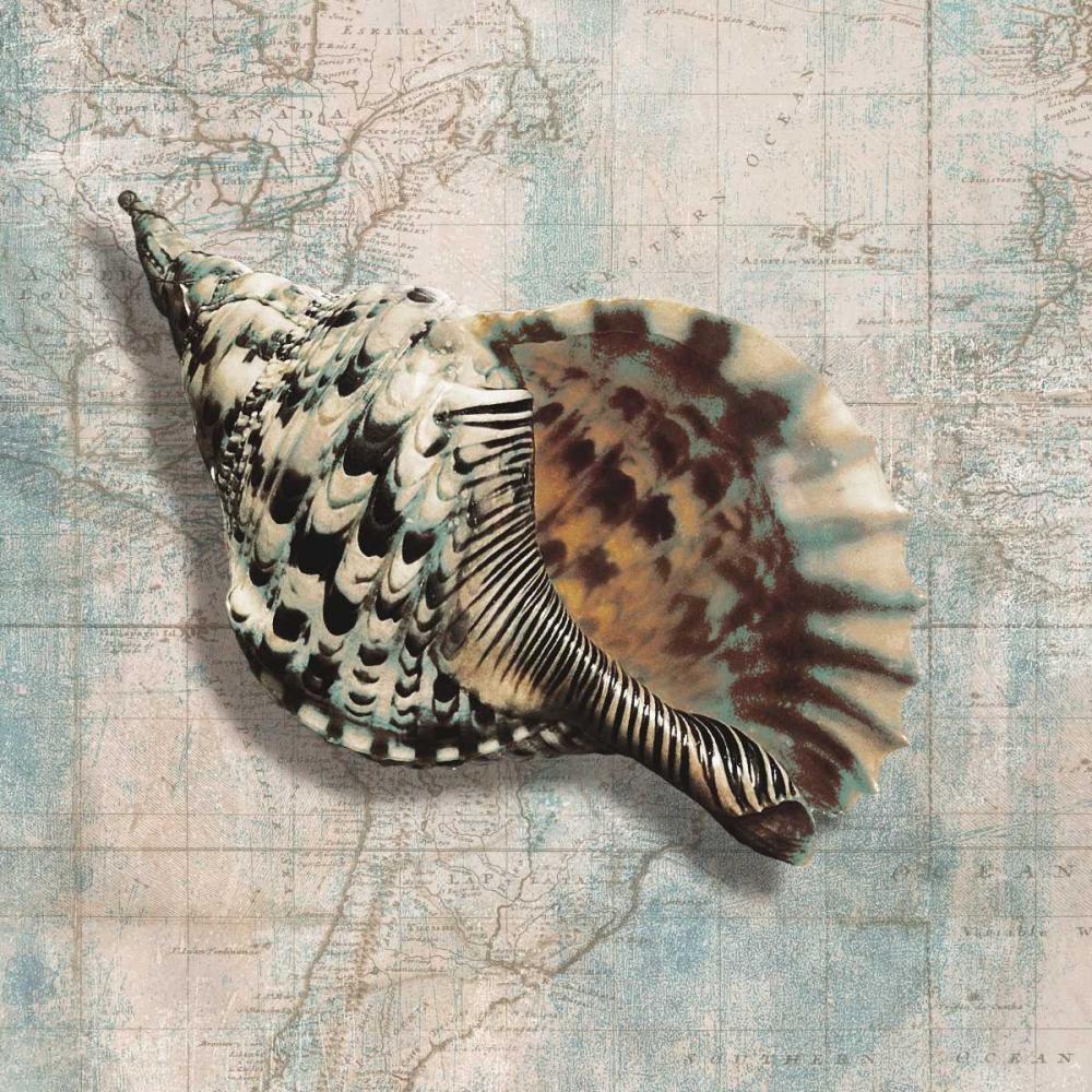 Sea Shell von Broome, Ted <br> max. 135 x 135cm <br> Preis: ab 10€
