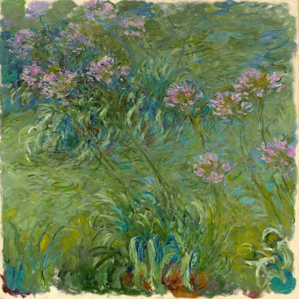 konfigurieren des Kunstdrucks in Wunschgröße Agapanthe von Monet, Claude
