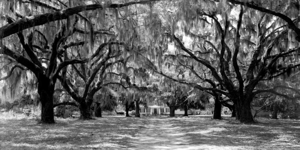 konfigurieren des Kunstdrucks in Wunschgröße Avenue of oaks, South Carolina von Anonymous