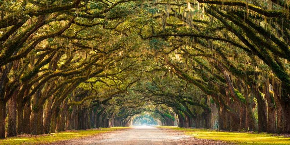 konfigurieren des Kunstdrucks in Wunschgröße Path lined with oak trees von Anonymous