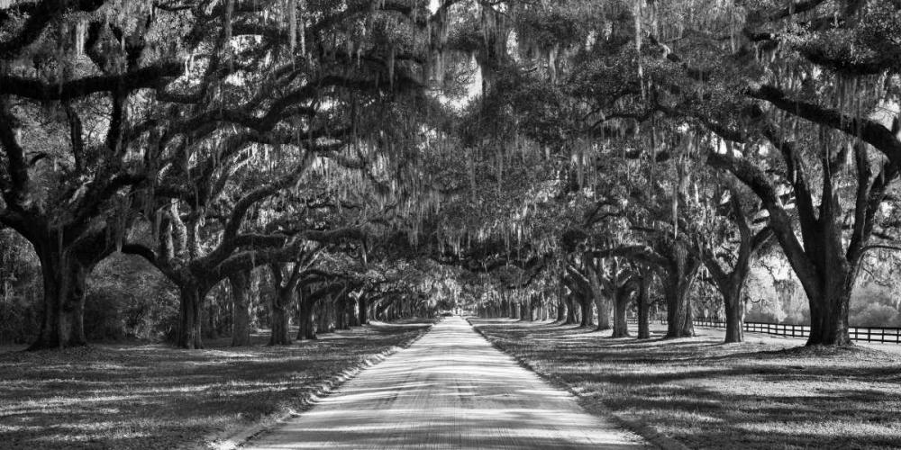 konfigurieren des Kunstdrucks in Wunschgröße Tree lined plantation entrance, South Carolina von Anonymous