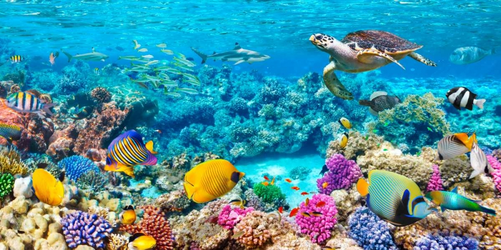 Sea Turtle and fish- Maldivian Coral Reef von Pangea Images <br> max. 213 x 107cm <br> Preis: ab 10€