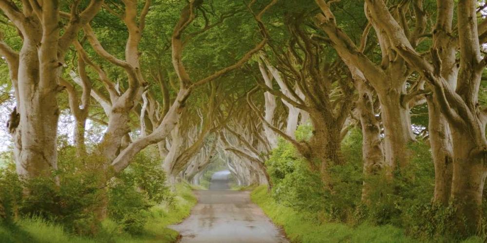 konfigurieren des Kunstdrucks in Wunschgröße The Dark Hedges, Ireland von Pangea Images