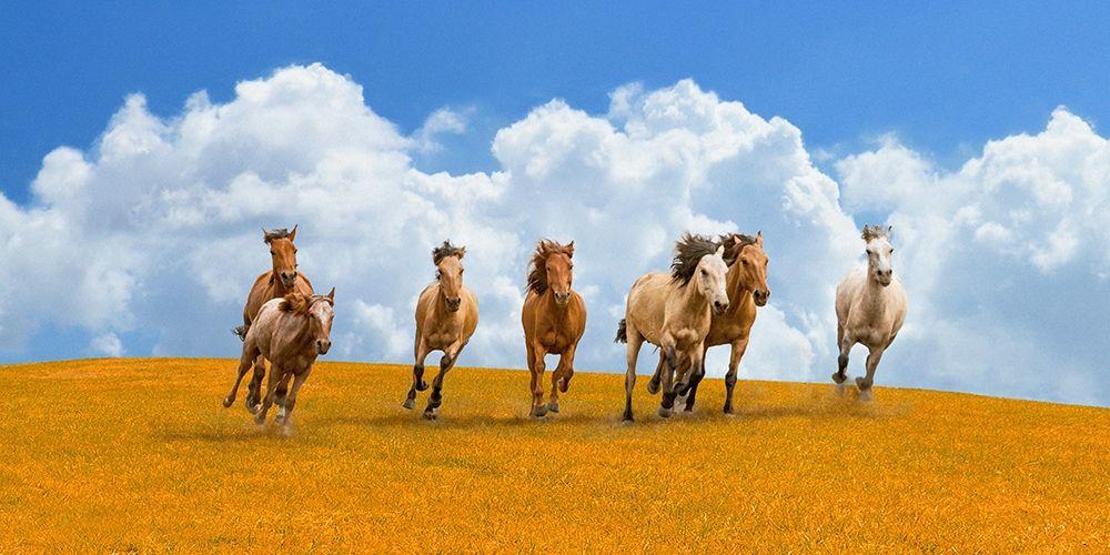 konfigurieren des Kunstdrucks in Wunschgröße Herd of wild horses von Pangea Images