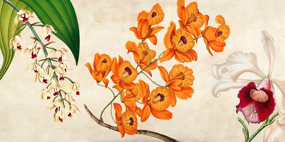 konfigurieren des Kunstdrucks in Wunschgröße Panneau Botanique II von Dellal, Remy
