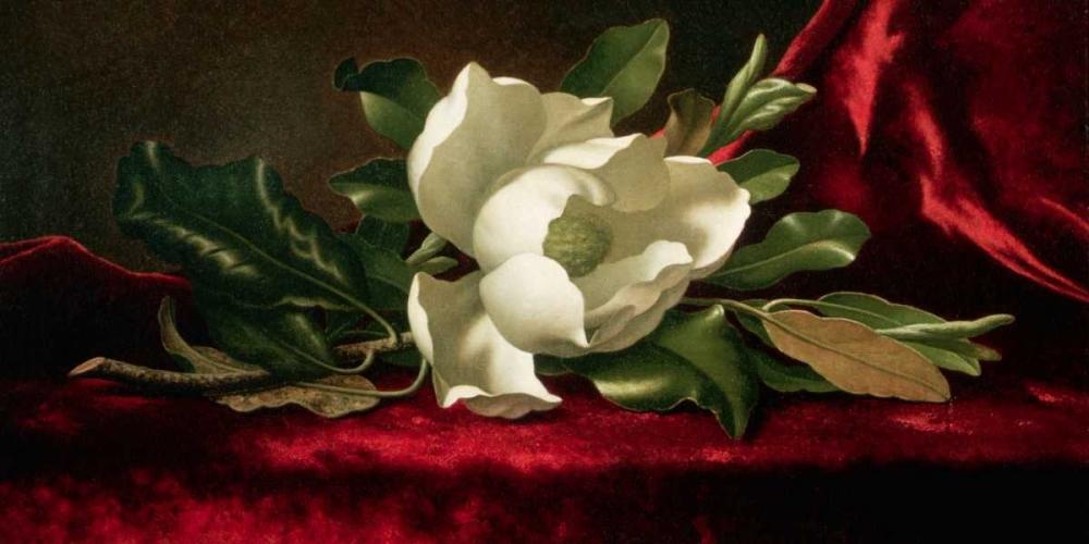konfigurieren des Kunstdrucks in Wunschgröße Magnolia von Heade, Martin Johnson