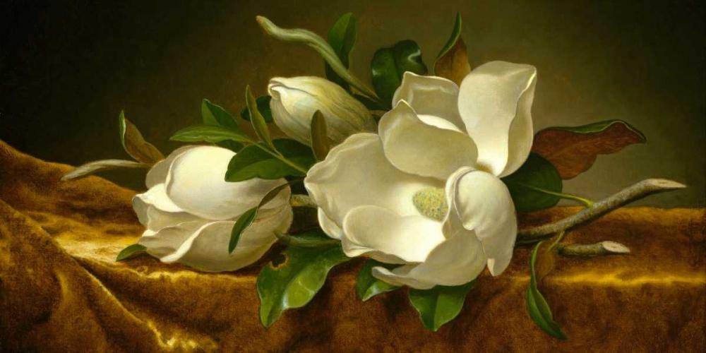 konfigurieren des Kunstdrucks in Wunschgröße Magnolias on Gold Velvet Cloth von Heade, Martin Johnson