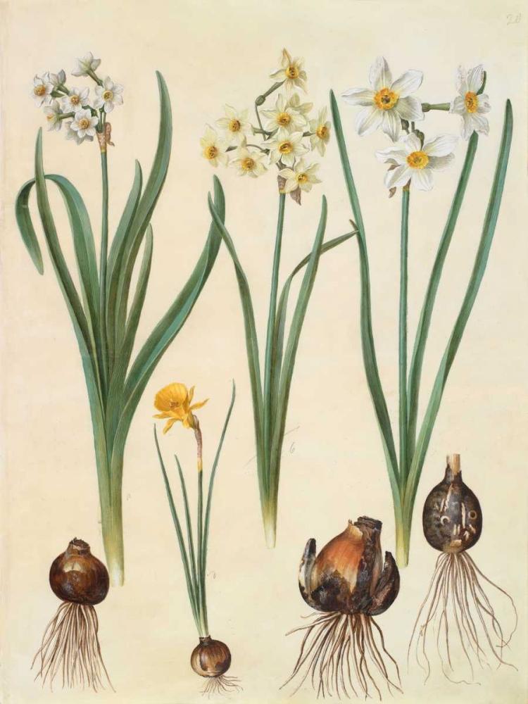 konfigurieren des Kunstdrucks in Wunschgröße Narcissus von Holtzbecher, Johannes S.