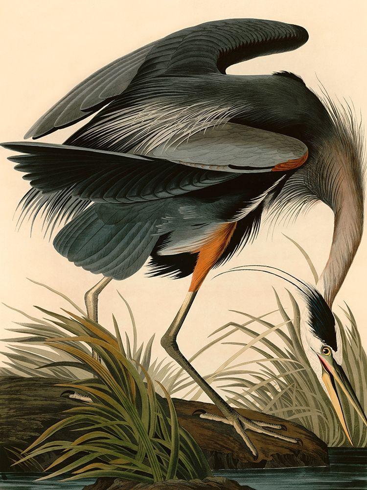 John James, Audubon
