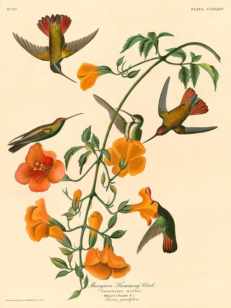 John James, Audubon