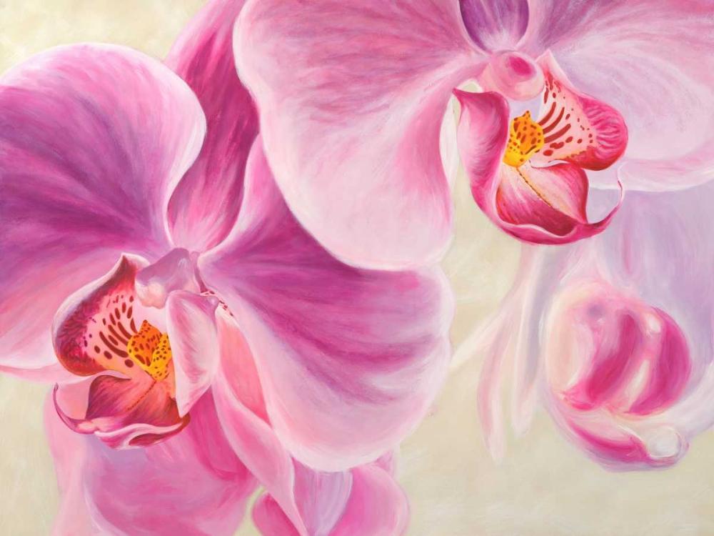 konfigurieren des Kunstdrucks in Wunschgröße Purple Orchids von Ann, Cynthia