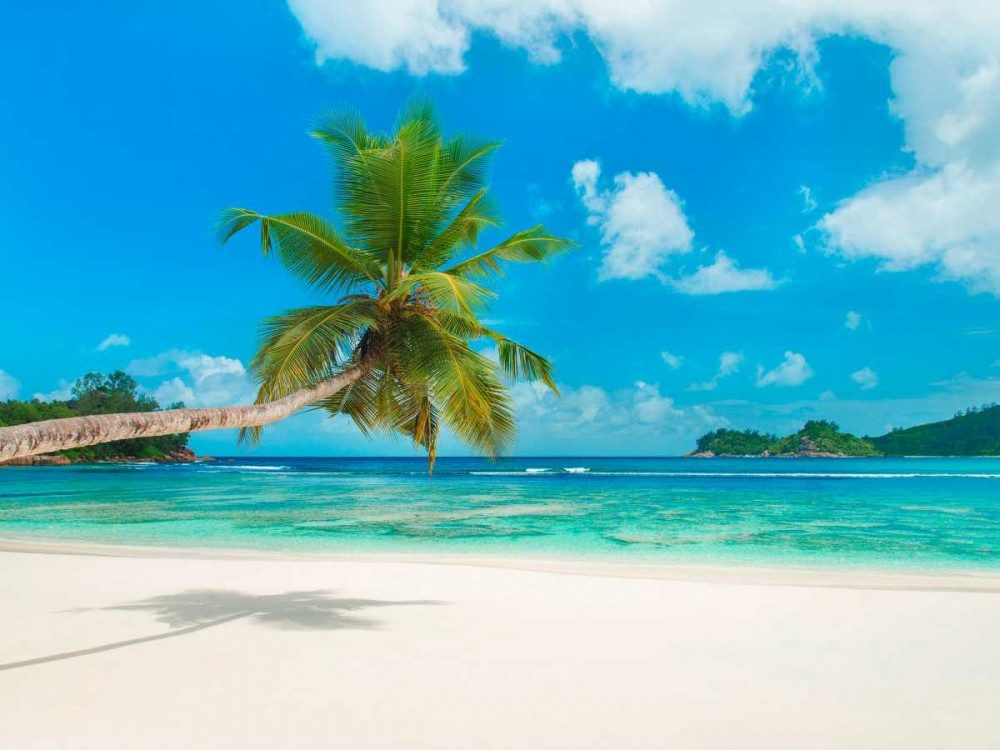 konfigurieren des Kunstdrucks in Wunschgröße Tropical beach, Seychelles (detail) von Anonymous