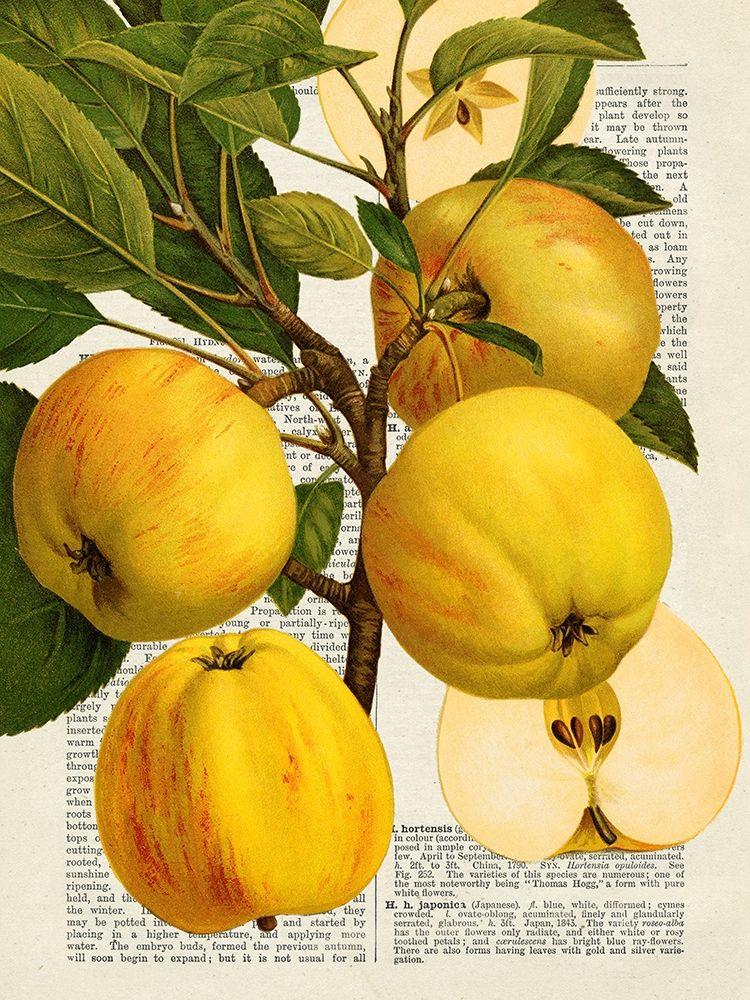 konfigurieren des Kunstdrucks in Wunschgröße Fruits de saison, Pommes von Dellal, Remy