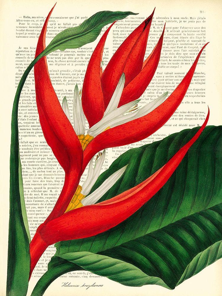 konfigurieren des Kunstdrucks in Wunschgröße Vintage Botany I von Dellal, Remy