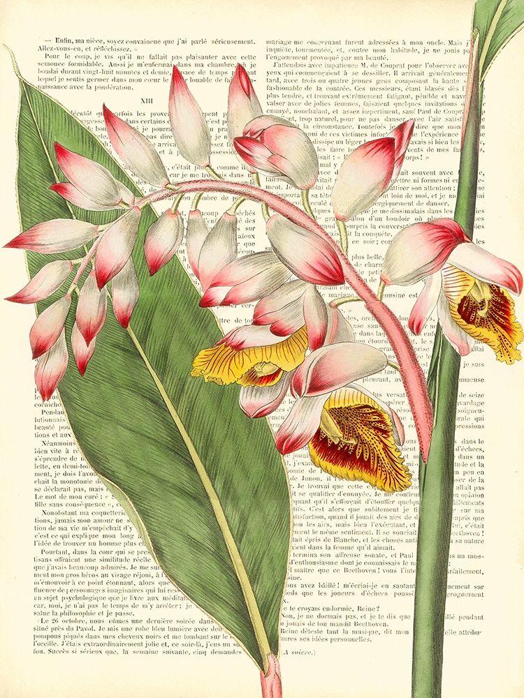 konfigurieren des Kunstdrucks in Wunschgröße Vintage Botany II von Dellal, Remy