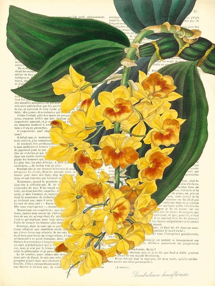konfigurieren des Kunstdrucks in Wunschgröße Vintage Botany III von Dellal, Remy
