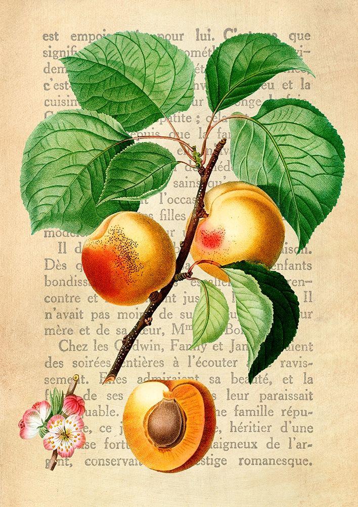 konfigurieren des Kunstdrucks in Wunschgröße Apricot- After Redoute von Dellal, Remy
