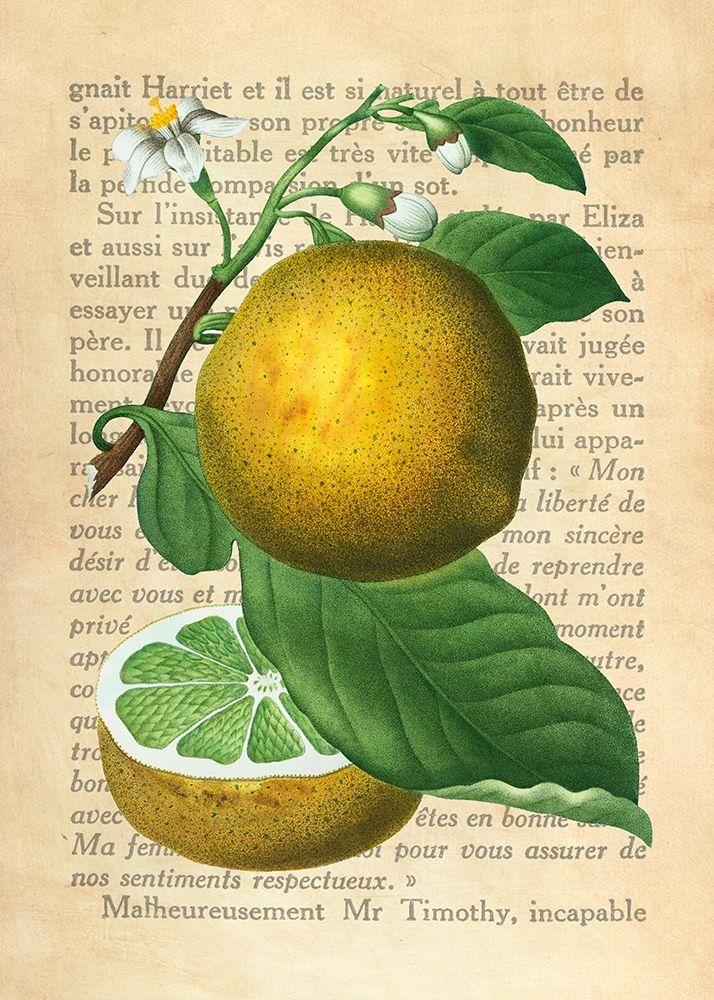 konfigurieren des Kunstdrucks in Wunschgröße Grapefruit- After Redoute von Dellal, Remy